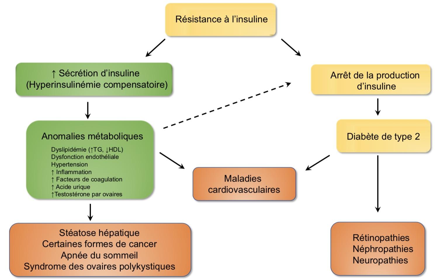 L'insuline : cette hormone qui nous fait grossir jour après jour…