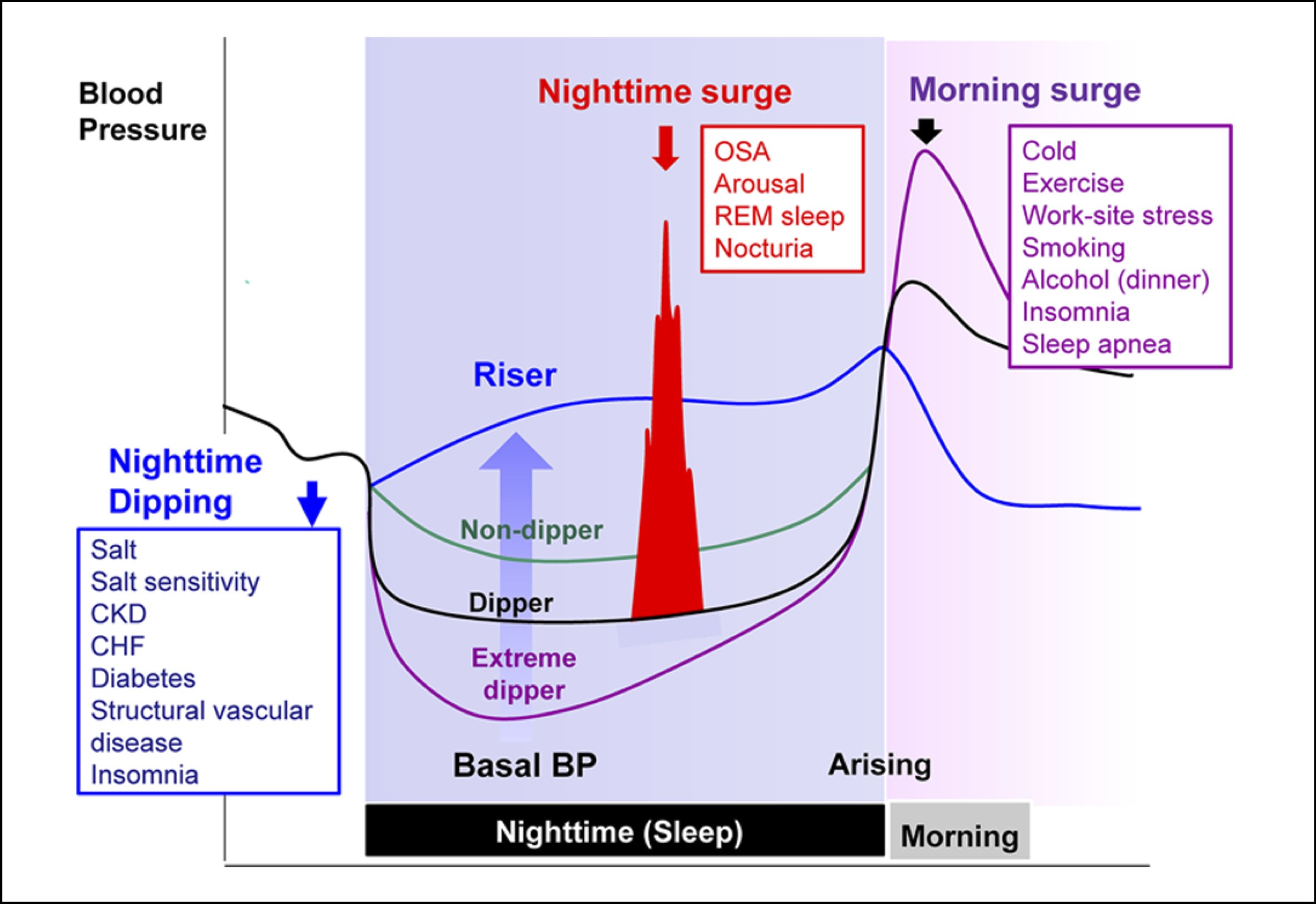 Chart demonstrating the characteristics and determinants of nocturnal hypertension.