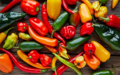 Spicing up the prevention of cardiovascular disease with chili peppers