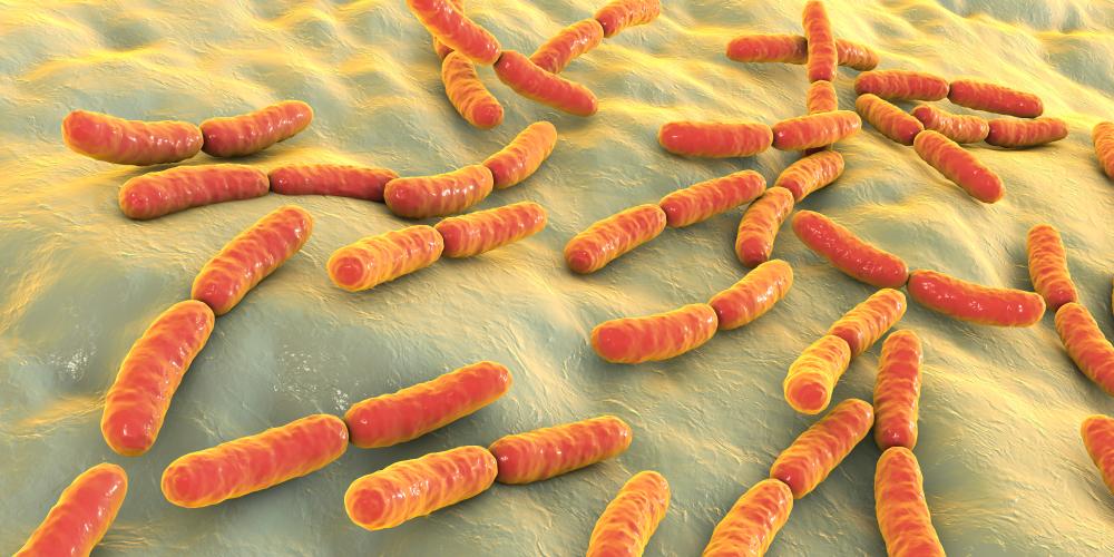 Un nouveau métabolite du microbiote lié aux maladies cardiovasculaires