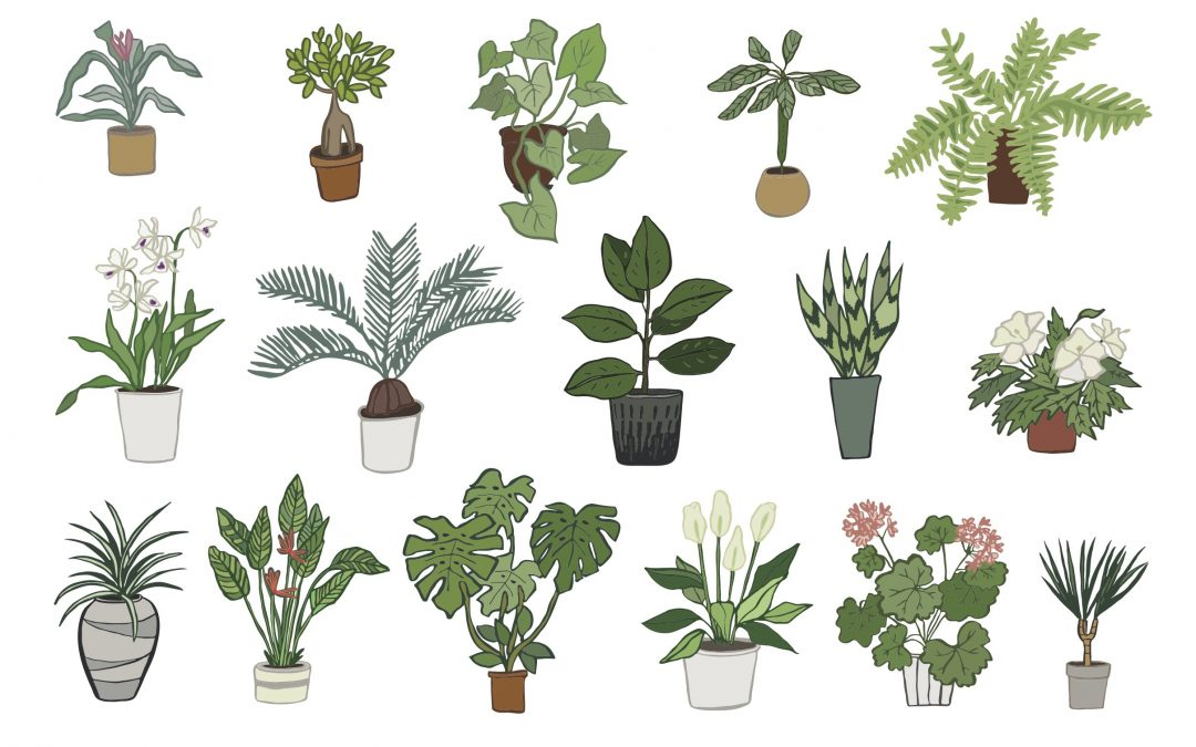 Do houseplants have beneficial effects on health?